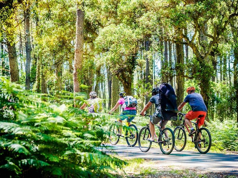 Gruppe Radfahrer bei einer Tour durch einen Wald in der Nähe Schweinfurts